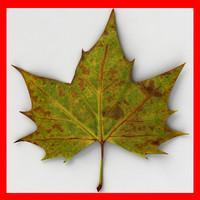 Fallen Leaf II