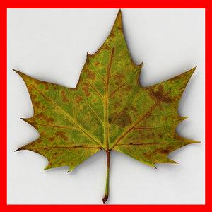 max fallen leaf