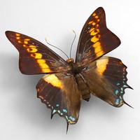 butterfly butt 3d max