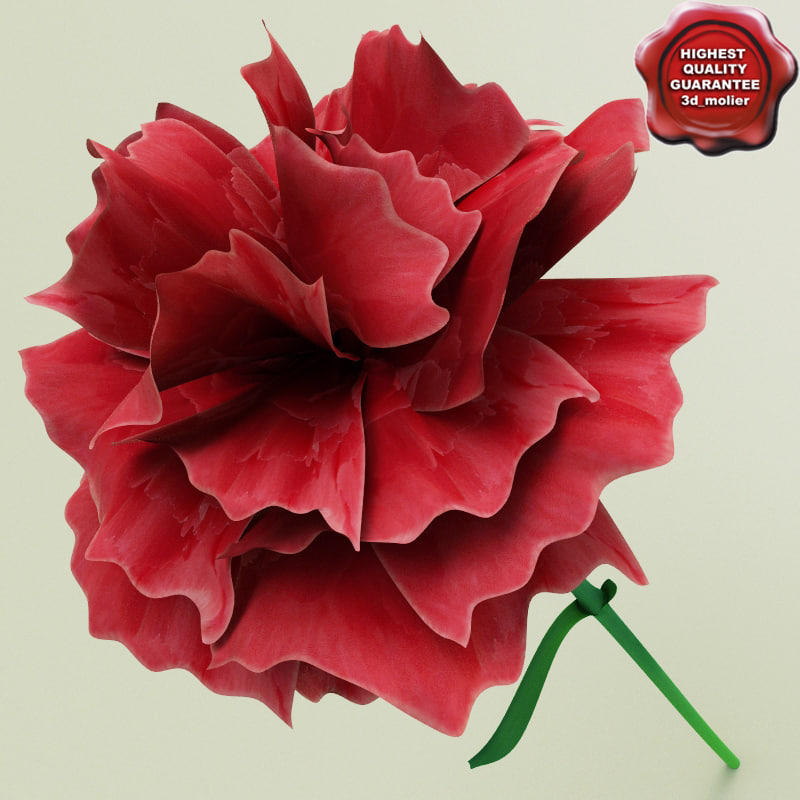 3d carnation modelled model