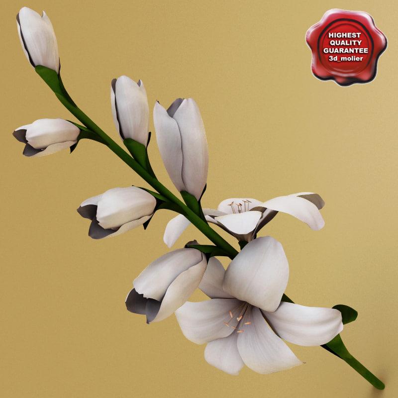 3d model gladiolus modelled