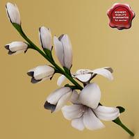 Gladiolus V2