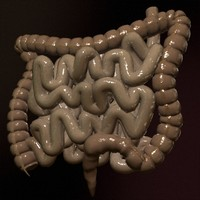 3d model realistic colon