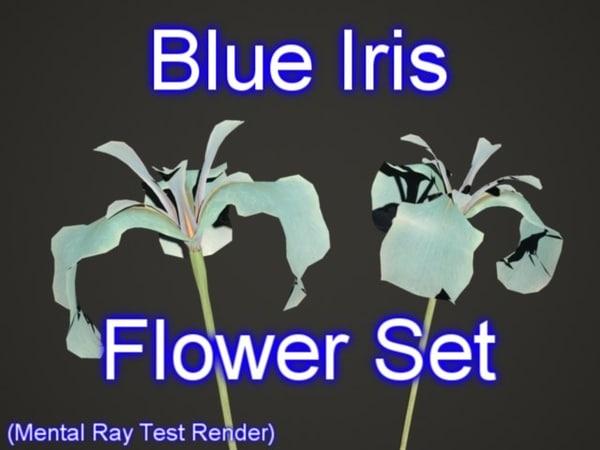 set blue iris flowers max