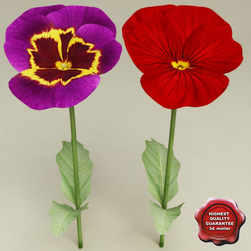 pansy modelled 3d 3ds