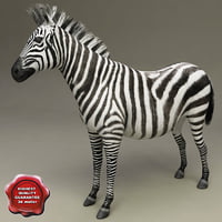 3d model zebra modelled