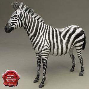 3d model zebra modelled