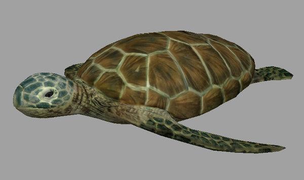 3d turtle realistic sea