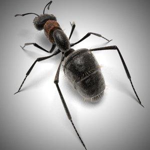 carpenter ant black 3d model