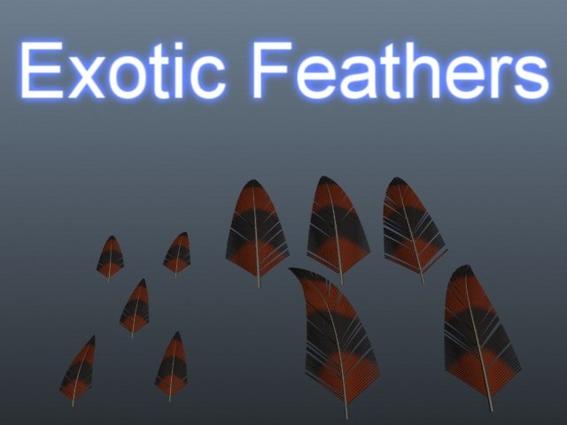 max exotic feathers