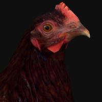 3d hen model