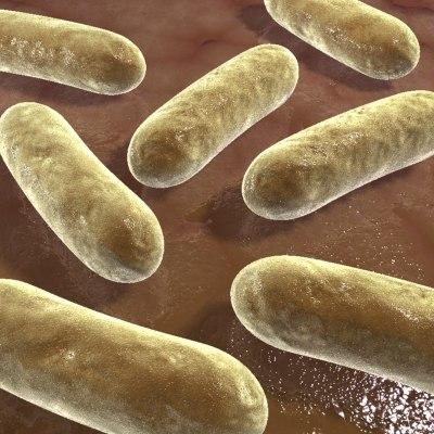 3d bacterias model
