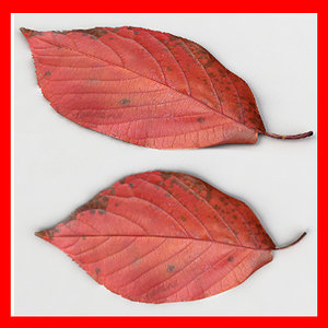3ds max fallen leaf