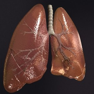 realistic lungs 3d max
