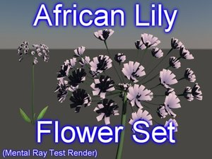 3d model set african lily flowers