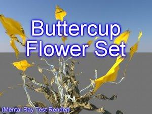 set buttercup flowers 3d model