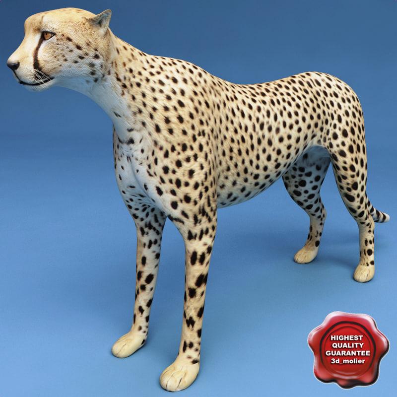 maya cheetah modelled