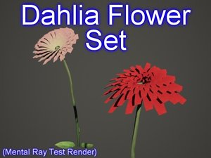 set dahlia flowers 3d model