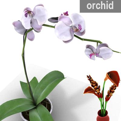 orchid flower plant 3d model