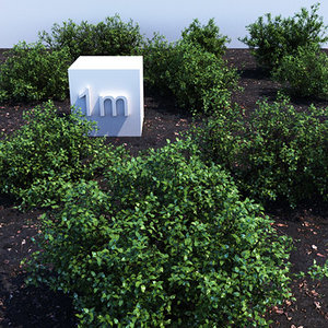3dsmax holly shrubs collections