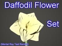 max set daffodil