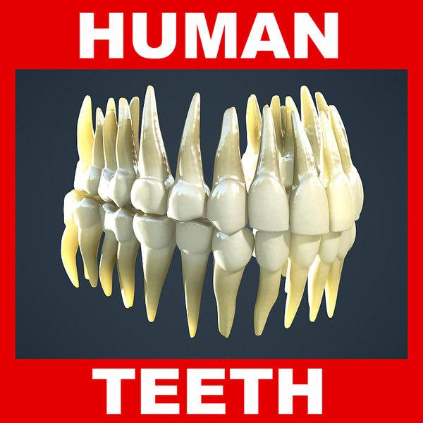human teeth 3ds