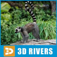 lemur primates 3d max