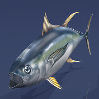 3d tuna fishing model
