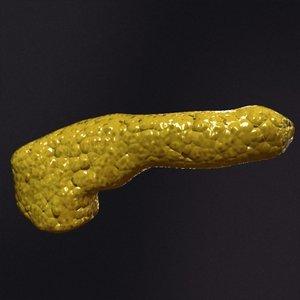 3d realistic pancreas