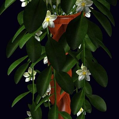 jasmine stand flowers 3d model