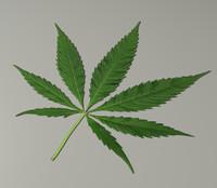 3d model marijuana leaf