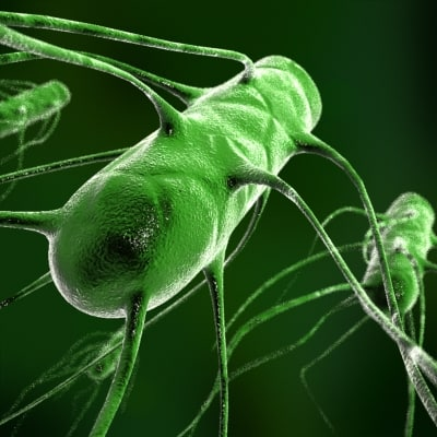 salmonella cell medical max