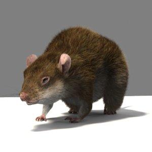 ma rat fur