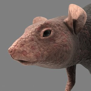 3d rat fur model