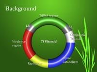 3d ti plasmid