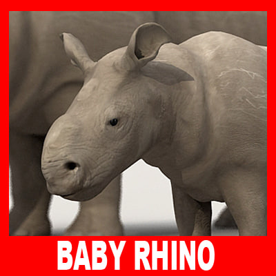 3d baby rhino model