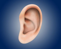 realistic ear 3ds