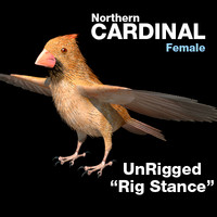 3d cardinal female rig stance model