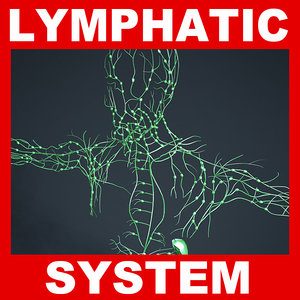 3ds max human lymphatic lymph