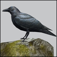 Raven,  low poly