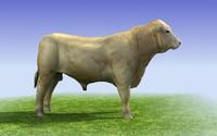 White Bull 3D model