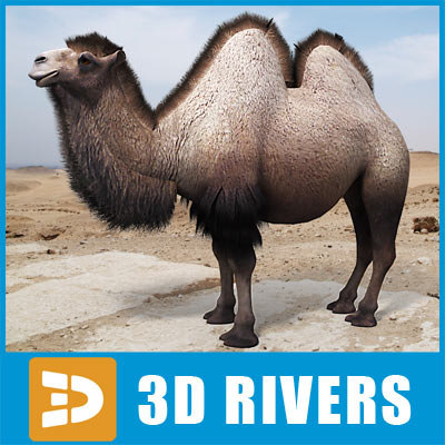 3d model bactrian camel humps