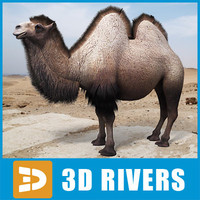 Bactrian Camel double humped by 3DRivers