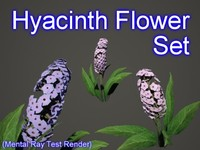 3d model set hyacinth flowers