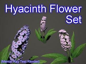 3d model set hyacinth flowers
