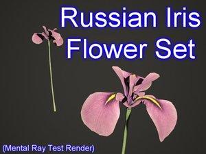 3dsmax set russian iris flowers
