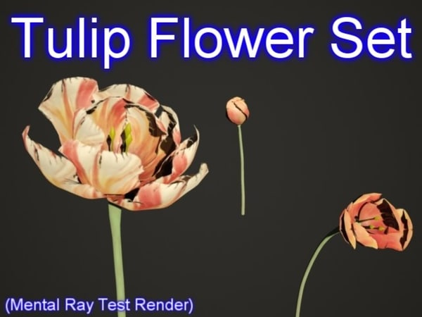 3d model set tulip flowers