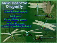 Anax Imperator Dragonfly