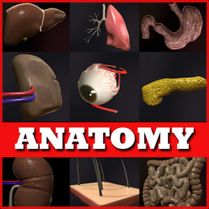 max anatomical realistic medical