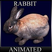 Bunny der Hase